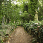 Lonely Pathways in London: Reflections of Highgate Cemetery