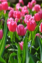 Bloomin' Spring