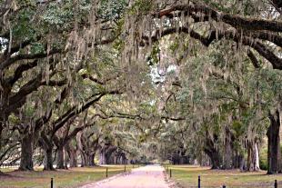 Charleston 2010 451 3